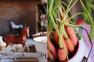 horse & carrots_600x400