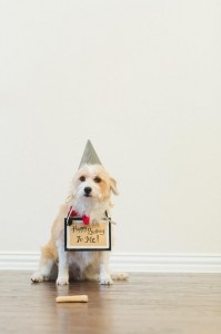 Doggy Birthday Party + For Dogs with Lots of Fun Ideas via Kara's Party Ideas | KarasPartyIdeas.com #ADogsBirthdayParty #DogParty #PartyIdeas #Supplies (13)
