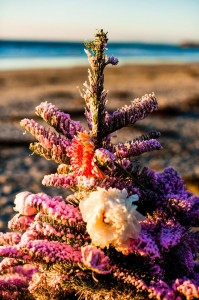 Holiday Beach Bingo Bridal Shower with Such Cute Ideas via Kara's Party Ideas KarasPartyIdeas.com #ChristmasBeachParty #ChristmasBridalShower #BeachBridalShower #PartyIdeas #Supplies (10)