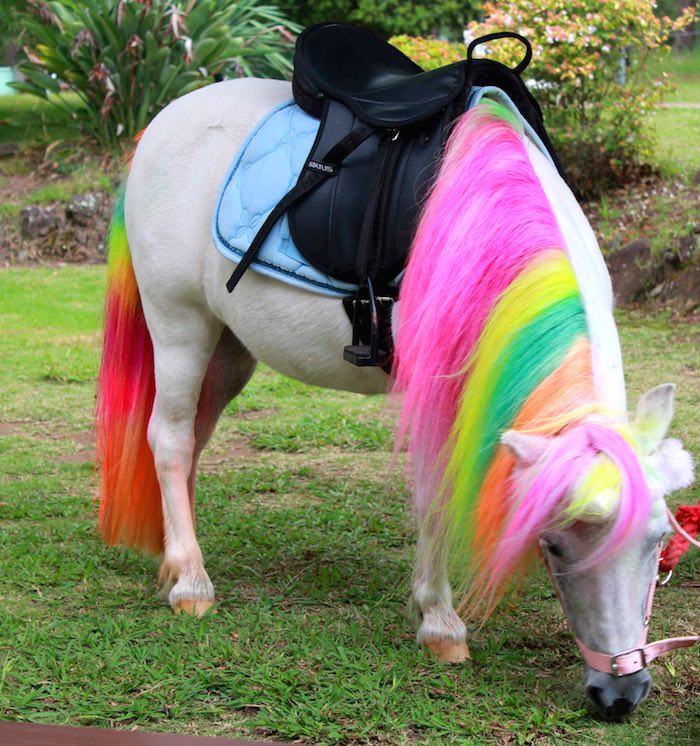 Karas Party Ideas Rainbow Unicorn Themed Birthday Party