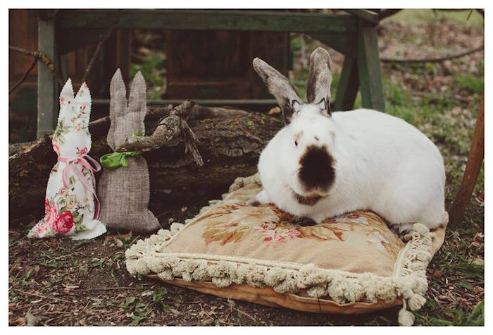 Bunny Rabbit from a Spring Easter Brunch Party via Kara's Party Ideas! KarasPartyIdeas.com (15)