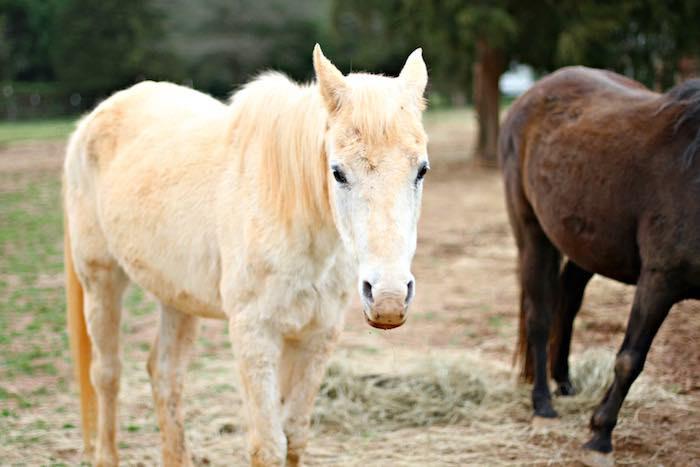 Horses from a Kentucky Derby Garden Party via Kara's Party Ideas | KarasPartyIdeas.com (9)