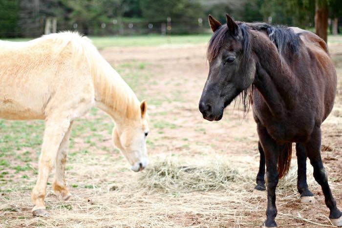 Horses from a Kentucky Derby Garden Party via Kara's Party Ideas | KarasPartyIdeas.com (8)