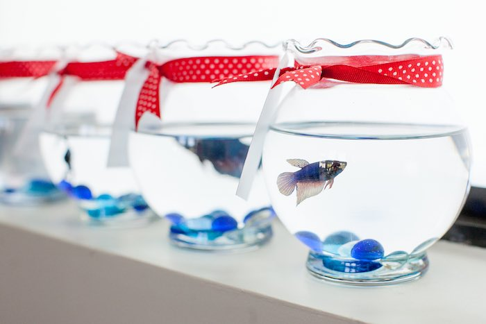 Betta Fish favors from a Cat in the Hat themed Birthday Party via Kara's Party Ideas | KarasPartyIdeas.com - The Place for All Things Party! (69)