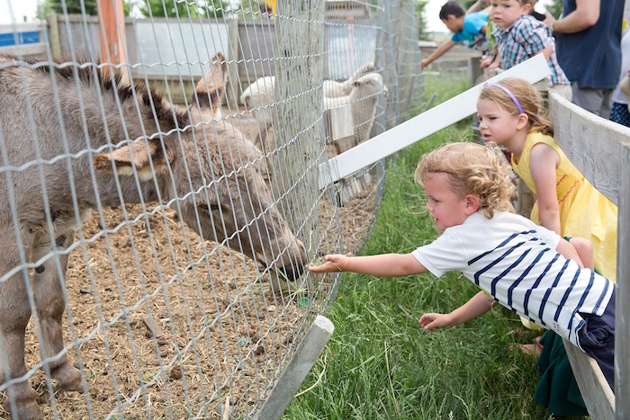 Kids feeding the animals at a Glamorous Barnyard Birthday Bash via Kara's Party Ideas | KarasPartyIdeas.com (6)
