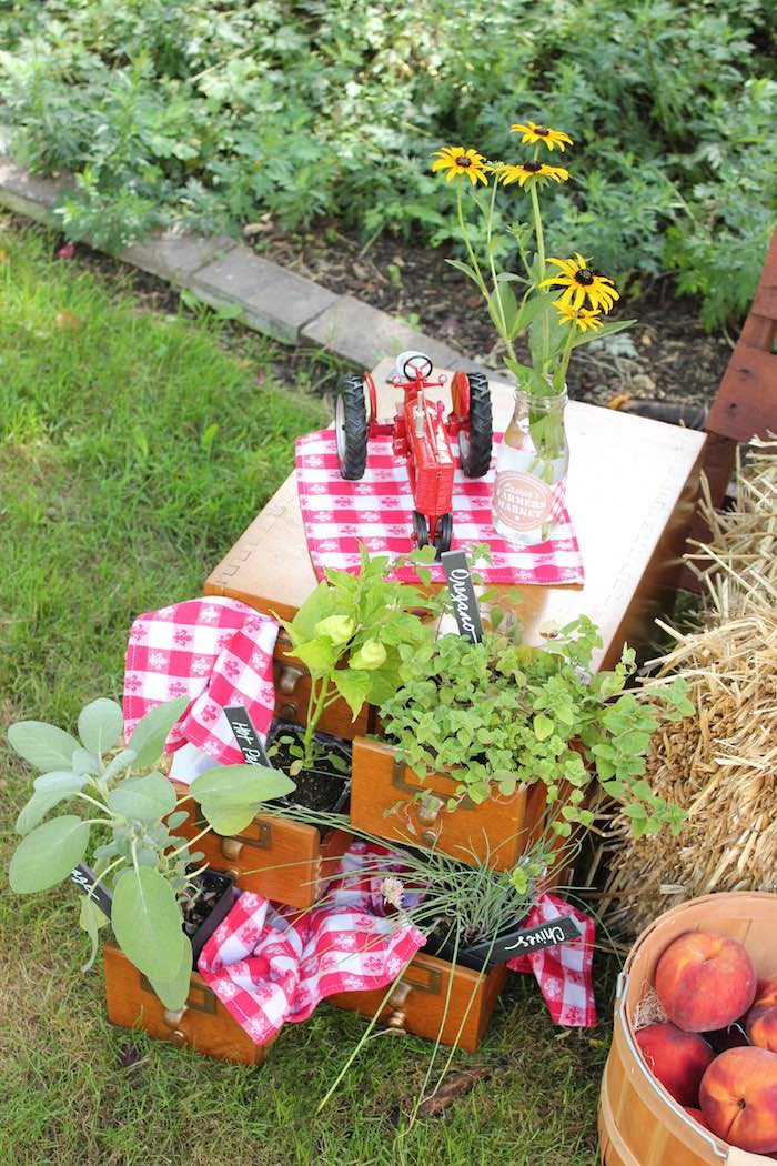 Spice garden placed in pull out drawers from a Farmers Market 1st Birthday Party on Kara's Party Ideas | KarasPartyIdeas.com (29)