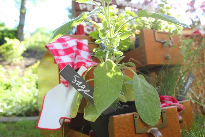 Fresh plants + herbs from a Farmers Market 1st Birthday Party on Kara's Party Ideas | KarasPartyIdeas.com (10)
