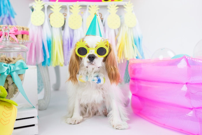 Puppy in shades from a Tropical Pool Party for Puppies on Kara's Party Ideas | KarasPartyIdeas.com (23)