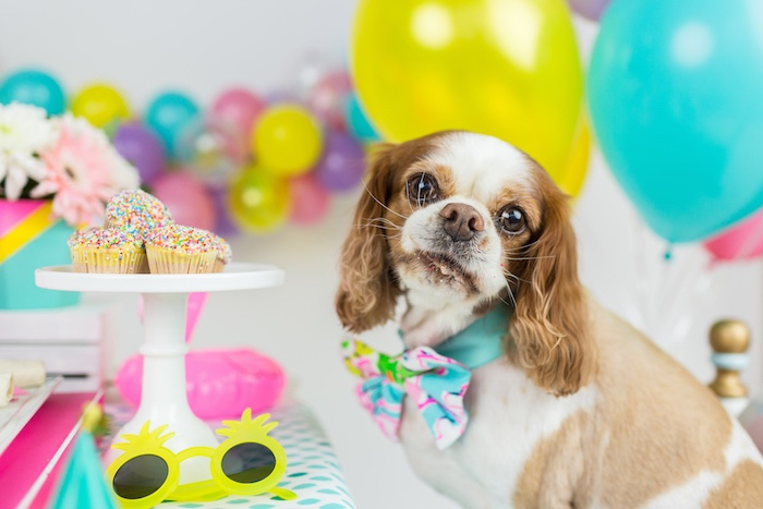 Tropical Pool Party for Puppies on Kara's Party Ideas | KarasPartyIdeas.com (17)