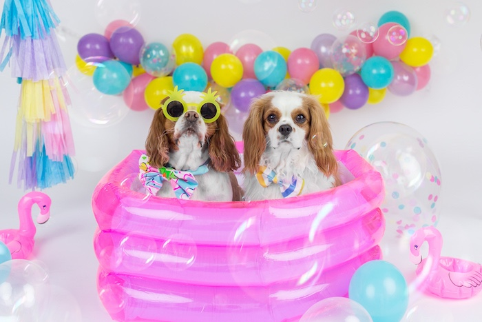 Puppies in a pink pool from a Tropical Pool Party for Puppies on Kara's Party Ideas | KarasPartyIdeas.com (7)