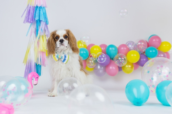 Kara's Party Ideas Tropical Pool Party for Puppies | Kara