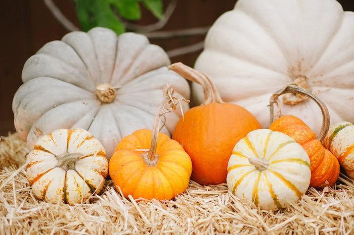 """Little Pumpkin"" Fall Picnic Birthday Party on Kara's Party Ideas   KarasPartyIdeas.com (43)"