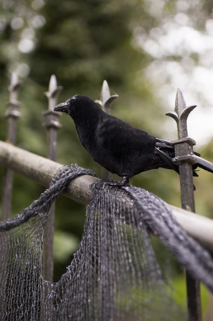 Faux black bird from a Spooktacular Halloween Party via Kara's Party Ideas | KarasPartyIdeas.com (23)
