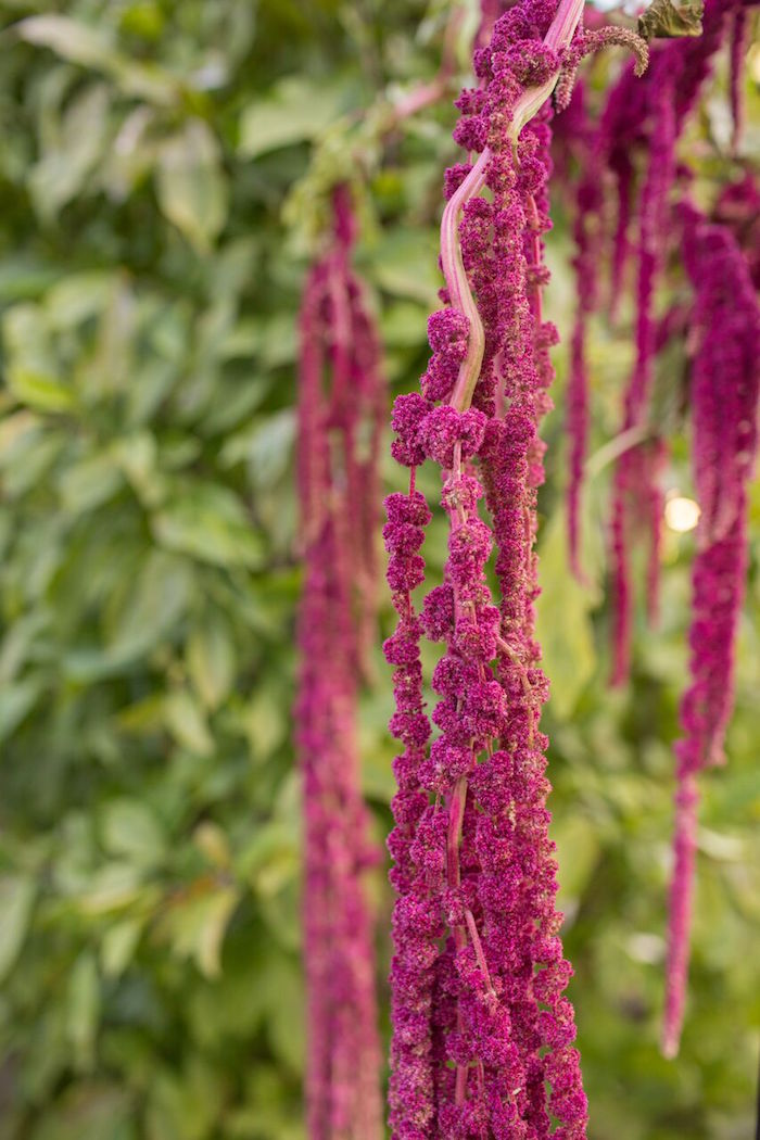 Hanging amaranth from a Bordeaux and Blush Friendsgiving Dinner Party on Kara's Party Ideas | KarasPartyIdeas.com (20)