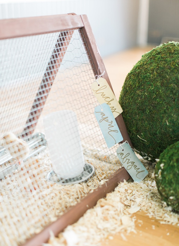 Cage of baby chicks from a Celebrate Spring Party on Kara's Party Ideas | KarasPartyIdeas.com (51)