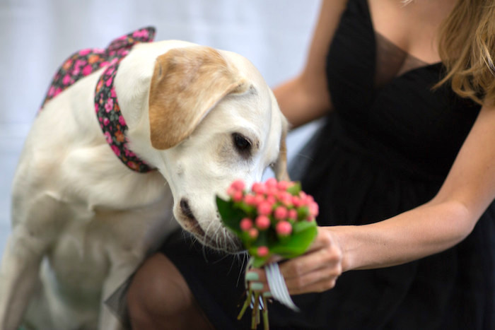Puppy love from a Kate Spade Inspired Bridal Shower on Kara's Party Ideas | KarasPartyIdeas.com (31)
