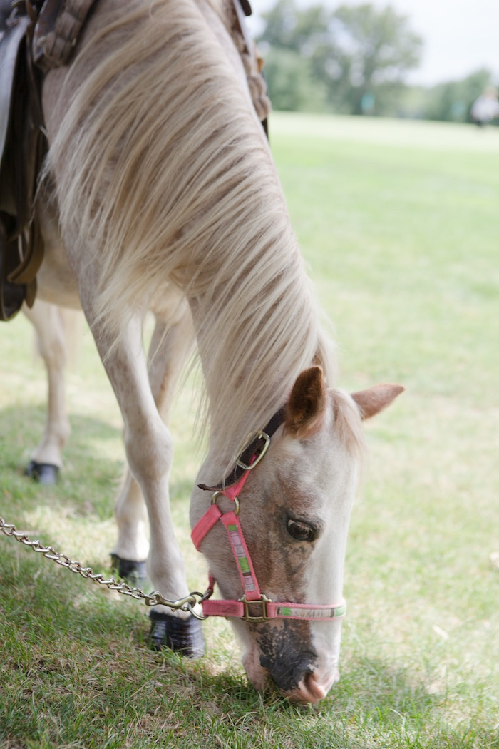 Grazing horse from an Elegant Parisian First Birthday Garden Party on Kara's Party Ideas | KarasPartyIdeas.com (15)