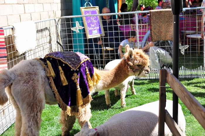 Arabian dressed alpaca from a Princess Jasmine Arabian Nights Birthday Party on Kara's Party Ideas | KarasPartyIdeas.com (8)