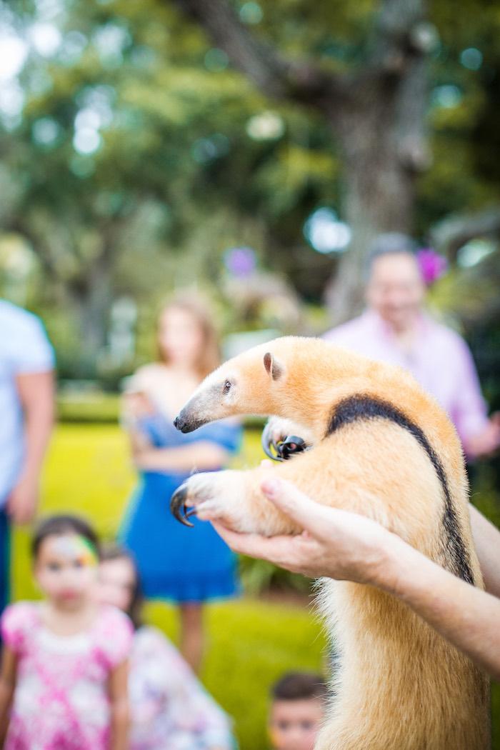 Animal show from an American Girl Doll Lea Clark - Rainforest Birthday Party on Kara's Party Ideas   KarasPartyIdeas.com (6)