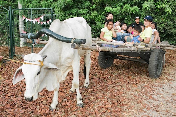 Rustic wagon ride from a Farm Birthday Party on Kara's Party Ideas | KarasPartyIdeas.com (19)
