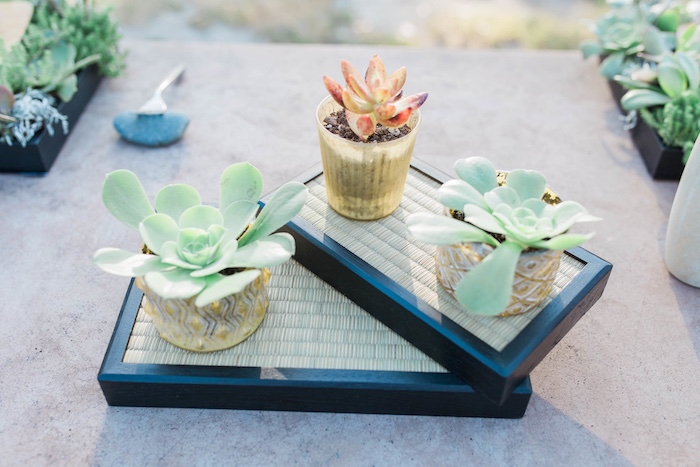"Succulent centerpieces from an ""Au Naturel"" Outdoor Bridal Shower on Kara's Party Ideas 
