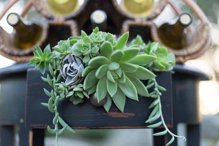"Succulents from an ""Au Naturel"" Outdoor Bridal Shower on Kara's Party Ideas 