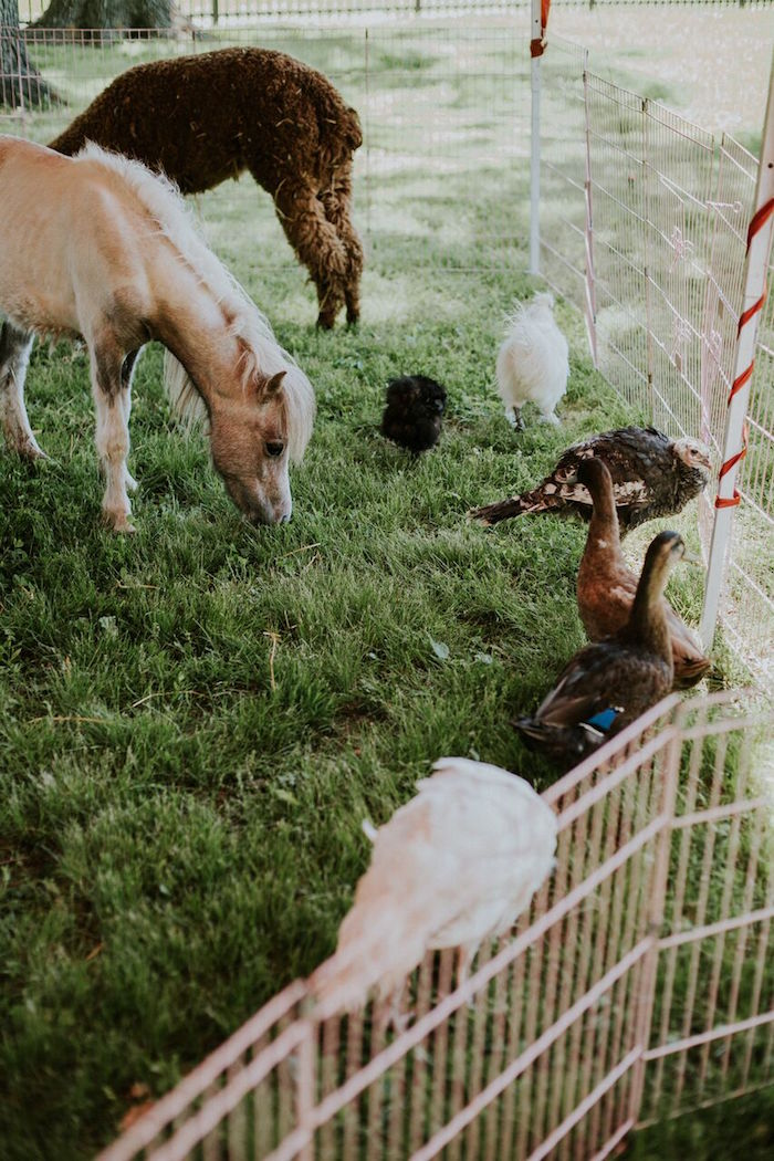 Petting zoo from a Modern Vintage Farm-to-Table Birthday Party on Kara's Party Ideas | KarasPartyIdeas.com (14)