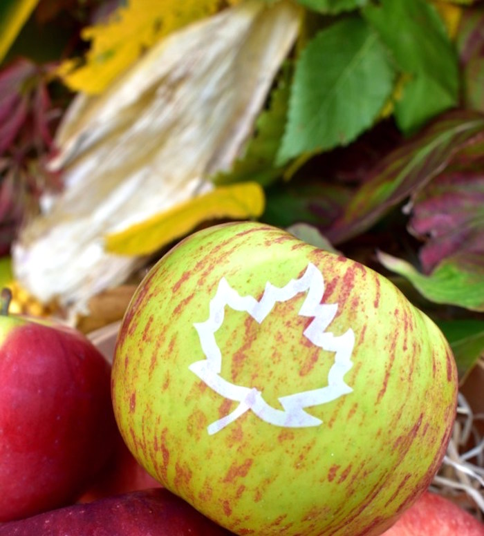 Tree leaf-imprinted apple from a Fall Tailgate Party on Kara's Party Ideas | KarasPartyIdeas.com (7)