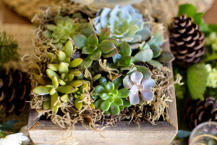 Succulents from a Holiday Boho Baby Shower on Kara's Party Ideas | KarasPartyIdeas.com (23)
