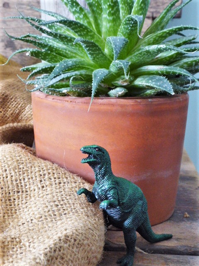 Dinosaur & Succulent from a from a Rustic Dinosaur Birthday Party via Kara's Party Ideas | KarasPartyIdeas.com