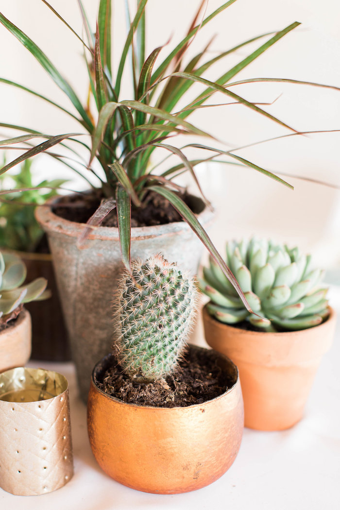 Cacti + Succulents from a Southwestern Cactus Baby Shower on Kara's Party Ideas | KarasPartyIdeas.com (33)