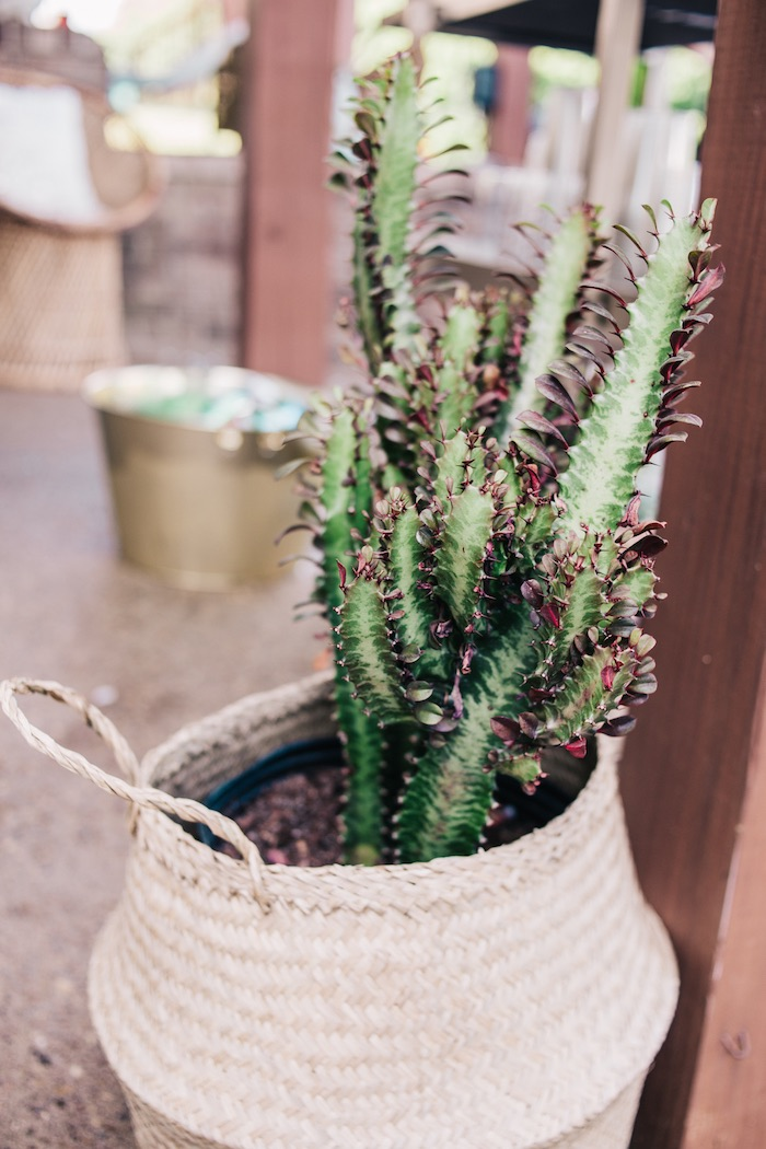 Basket Plant Decoration from a Boho Sweet Sixteen Birthday Party on Kara's Party Ideas | KarasPartyIdeas.com (19)