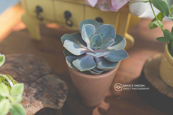 Planted Succulent from a Butterfly Garden Birthday Party on Kara's Party Ideas | KarasPartyIdeas.com (8)