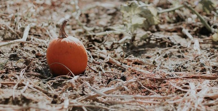 Fall + Halloween Birthday Party on Kara's Party Ideas | KarasPartyIdeas.com (3)