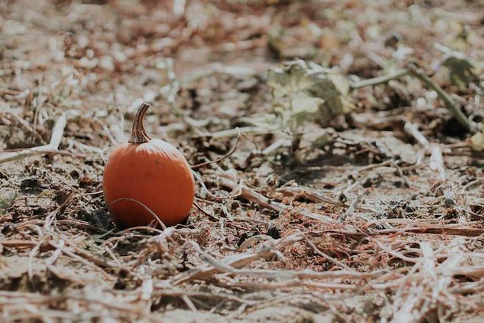 Pumpkin Patch from a Fall + Halloween Birthday Party on Kara's Party Ideas | KarasPartyIdeas.com (15)