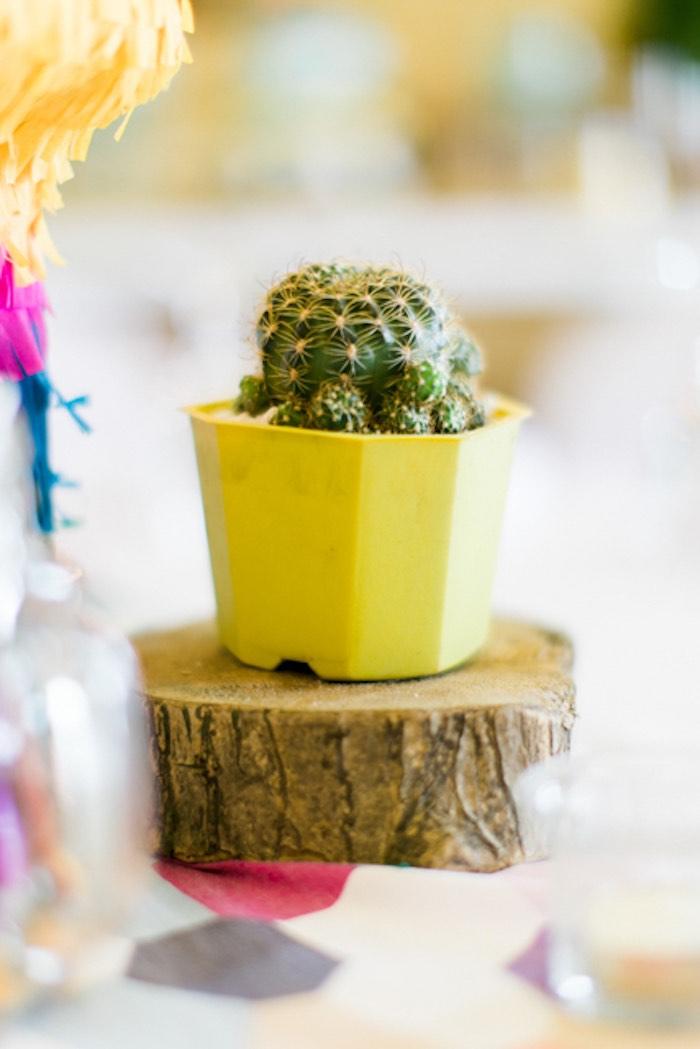 Cactus Centerpiece from a Mexican Birthday Fiesta on Kara's Party Ideas | KarasPartyIdeas.com