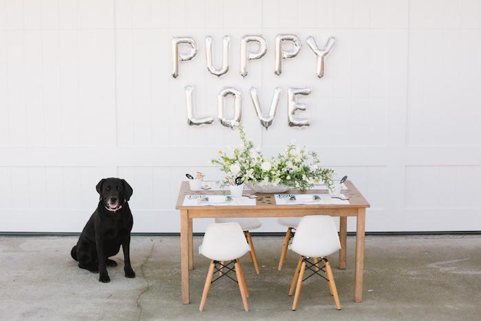 Puppy Party on Kara's Party Ideas | KarasPartyIdeas.com (34)