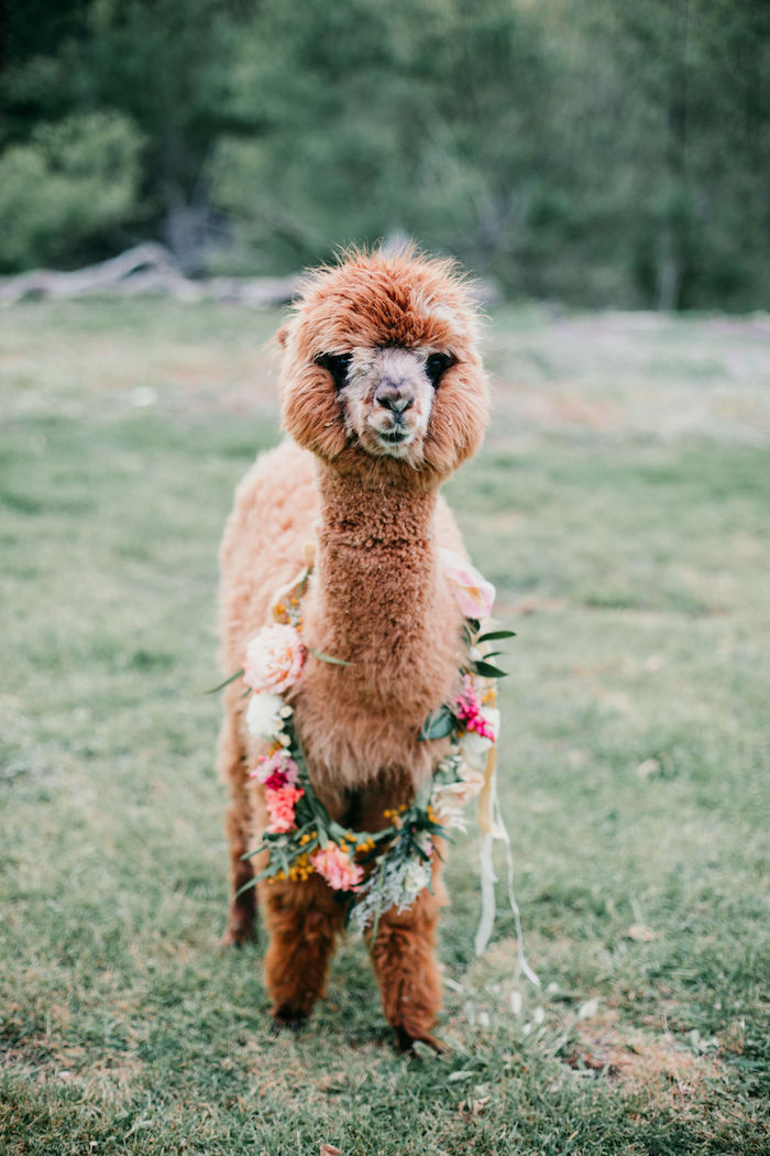 Alpaca Love Birthday Party on Kara's Party Ideas | KarasPartyIdeas.com (8)