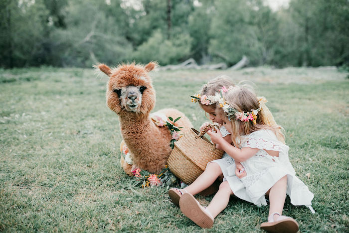 Alpaca Love Birthday Party on Kara's Party Ideas | KarasPartyIdeas.com (7)