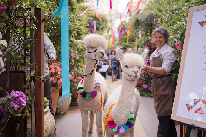 Peruvian Alpaca Inspired Wedding on Kara's Party Ideas | KarasPartyIdeas.com (17)