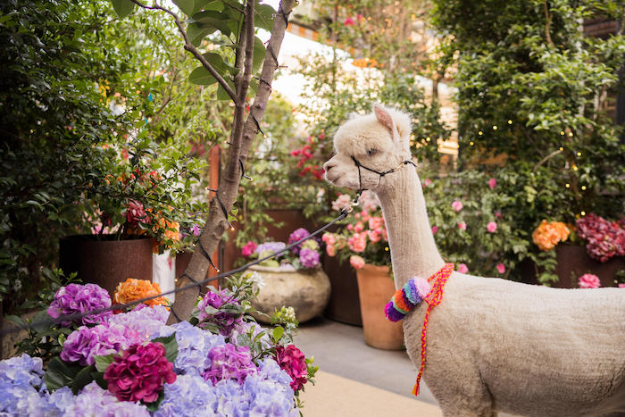 Peruvian Alpaca Inspired Wedding on Kara's Party Ideas | KarasPartyIdeas.com (16)