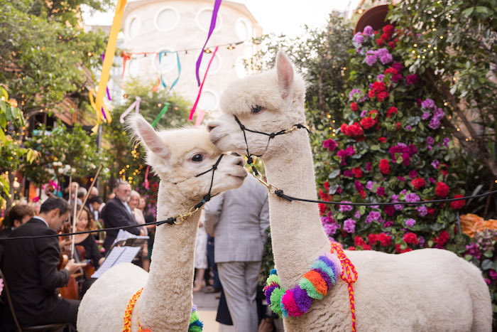 Peruvian Alpaca Inspired Wedding on Kara's Party Ideas | KarasPartyIdeas.com (14)