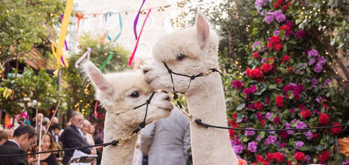 Peruvian Alpaca Inspired Wedding on Kara's Party Ideas | KarasPartyIdeas.com (3)