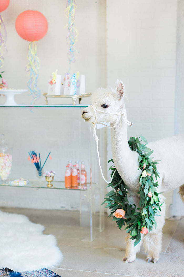 Alpaca wearing a Floral Garland from a Pretty Alpaca Party on Kara's Party Ideas | KarasPartyIdeas.com (32)