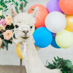 Pretty Alpaca Party on Kara's Party Ideas | KarasPartyIdeas.com (3)