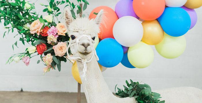 Pretty Alpaca Party on Kara's Party Ideas | KarasPartyIdeas.com (3)