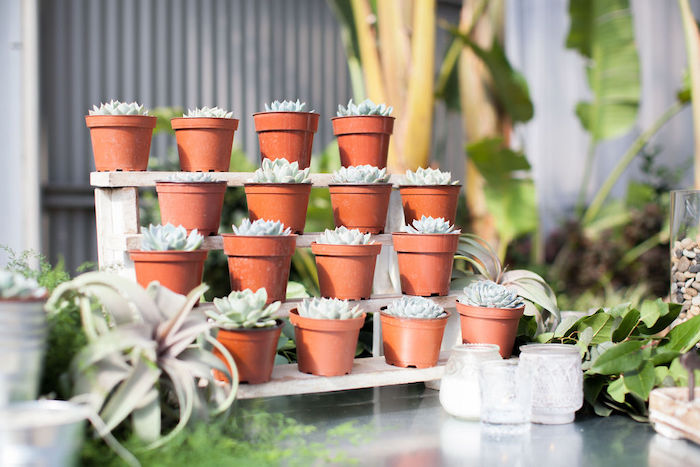 Succulents from an Ethereal Greenhouse Baby Shower on Kara's Party Ideas | KarasPartyIdeas.com (25)