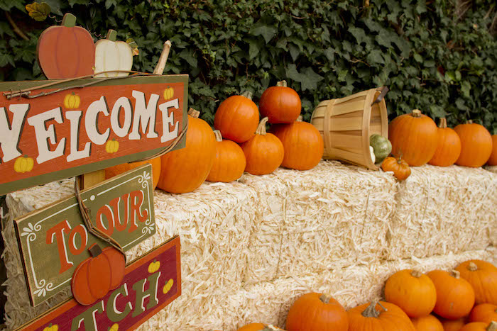 Pumpkin Patch Party Entrance from an Enchanting Backyard Halloween Party on Kara's Party Ideas | KarasPartyIdeas.com (4)