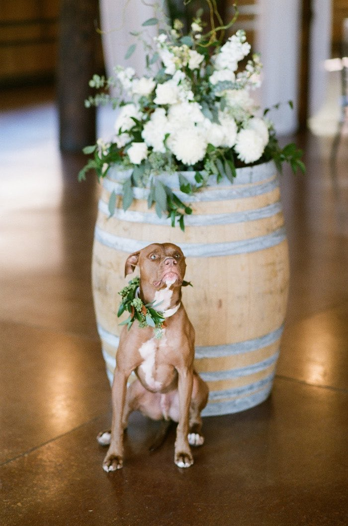 Best Man Dog from a Country Winter Lodge Wedding on Kara's Party Ideas | KarasPartyIdeas.com (33)