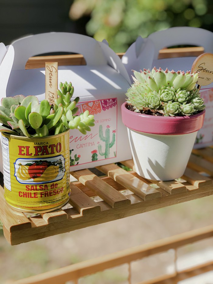 Succulent Favors from a Mexican Cantina Drive-By Birthday Party on Kara's Party Ideas | KarasPartyIdeas.com (22)